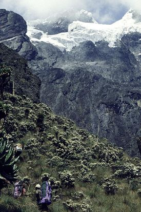 Ruwenzori photo